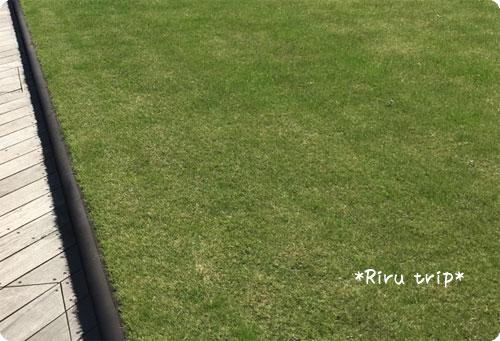 キッテ屋上芝生